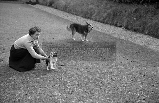 1953; A Photo Of A Woman With Two Dogs In The Garden Of The Royal Hotel On Valentia Island.