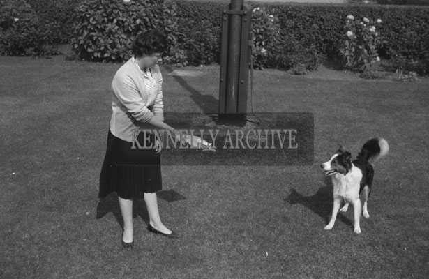 1953; A Photo Of A Lady With Her Dog In The Garden Of The Royal Hotel On Valentia Island.