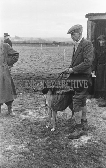 26th-28th December 1953; Greyhounds With Their Handlers At The Kingdom Cup Coursing Meeting At Ballybeggan Park, Tralee.