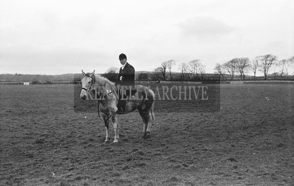 26th-28th December 1953; The judge at Ballybeggan Park for the Kingdom Cup coursing meeting.
