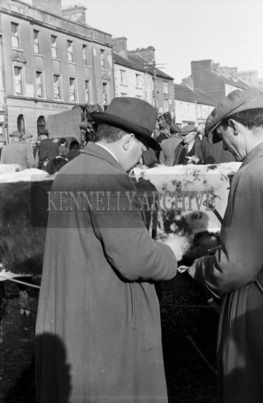 1st November 1954; A Photo Of Two Men Discuss Business At The Castleisland Horse And Cattle Fair.