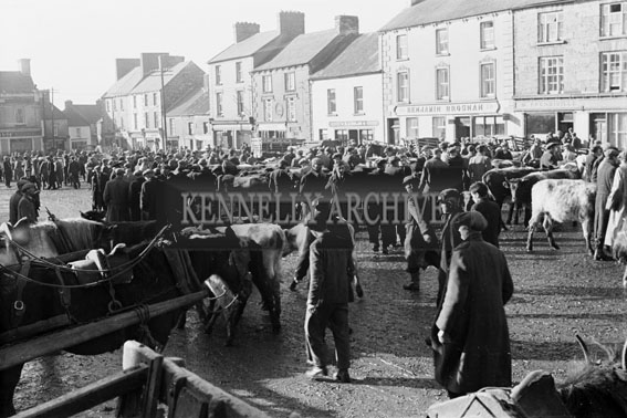 1st November 1954; A Photo Of The Busy Castleisland Horse And Cattle Fair.