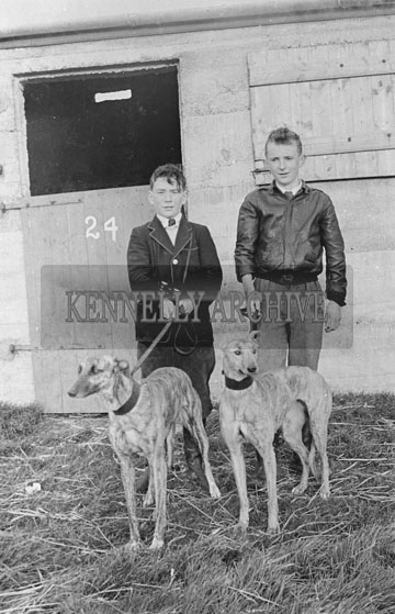 27th December 1954; Two Greyhounds With Their Young Handlers On The First Day Of The Kingdom Cup Coursing Meeting In Tralee.
