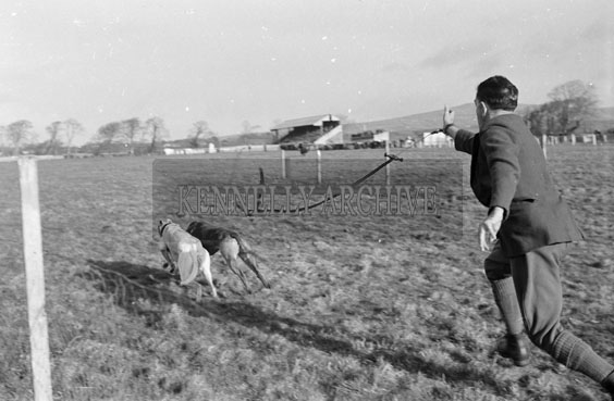 26th-28th December 1955; A photo taken at the Kingdom Cup coursing meeting in Tralee.
