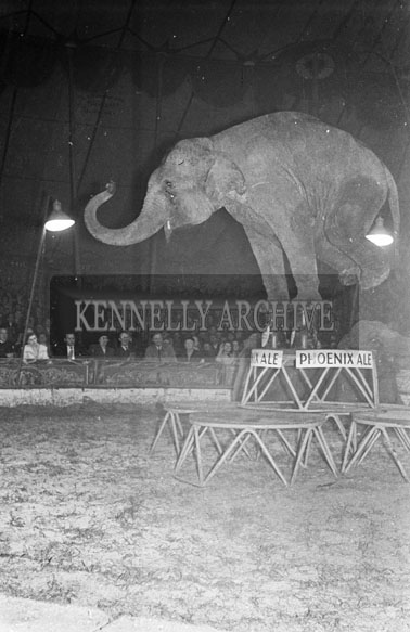 26th September 1956; Elephants from the Chipperfields Circus perform at the Big Top.