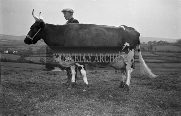 November 1956; A photo taken on the Cahill Farm in Dromulton in Currow.