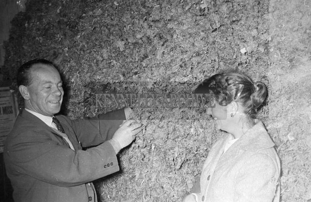 July 1957; J.J. O'Dowd, Maharees, shows a woman some Carrageen Moss.