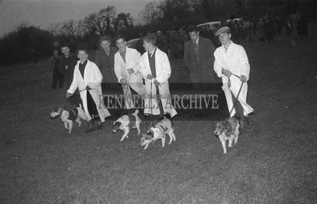 October 1957; A photo taken at a terrier race held during Castleisland Carnival.