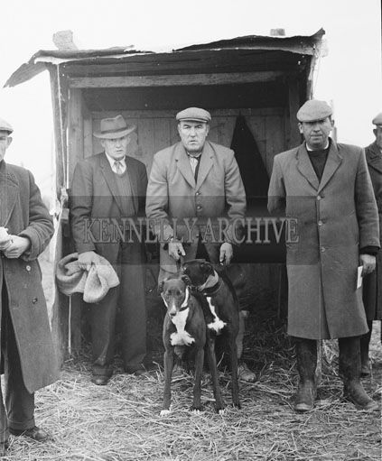 13th November 1962; Slipper Mick Murphy at a coursing meeting which took place in Listowel.
