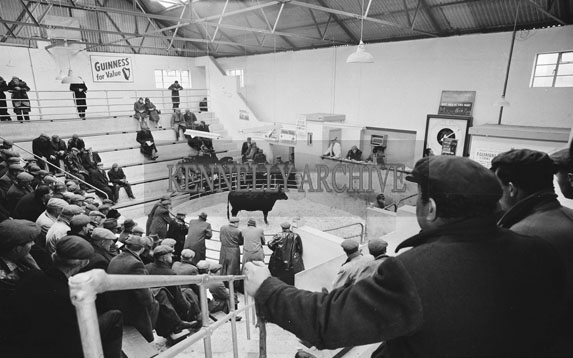 April 1962; A photo taken at the Tralee Mart in Rock Street.