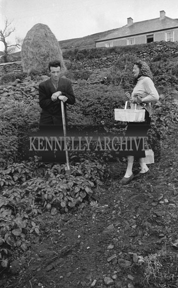 May 1962; A photo of a man and a woman working the land in Brandon.