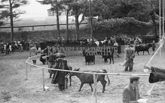 21st June 1962; A photo taken during the Cattle Show which took place at the Kingdom County Fair at the Ballymullen Barracks in Tralee.
