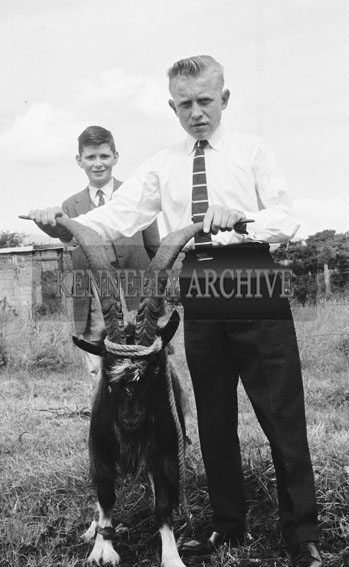 August 1962; The capturing of the Puck Goat in Killorglin