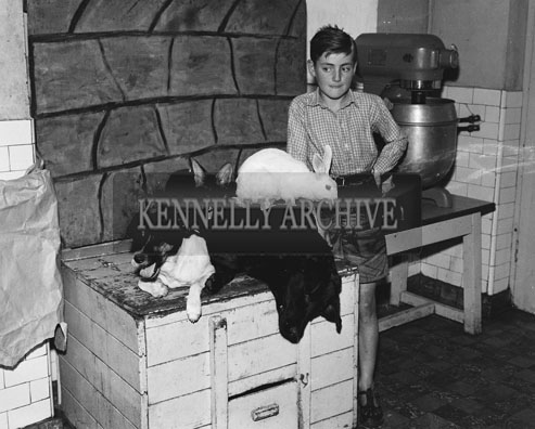 September 1962; A student from St Joseph's Industrial School poses for the camera with Sandy The Fox, Darkie the Labrador, Landy The Terrier and Hopper The Rabbit.  These natural enemies live happy together in St Joseph's in Tralee.