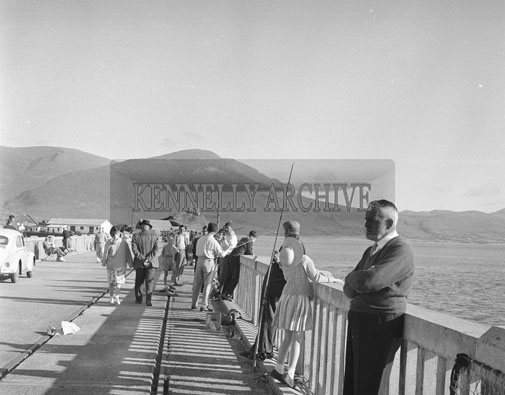 1st July 1962; Almost 100 Anglers competed in the European Shore Angling Heat which took place at the Pier in Fenit. They represented clubs from Ireland and abroad. The winner of the individual Heat was Mr F. Nolan from Dublin who caught 19lb and the Junior award went to Donal Enright of Valentia. The overall team prize went to Dublin.