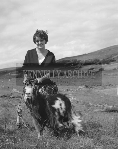 5th August 1962; A lady poses with the puck after it is captured on the slopes of Carrantuohill.
