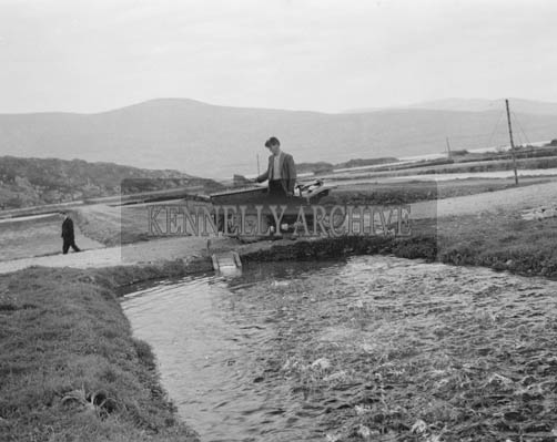 May 1964; A Photo taken of the Rainbow Trout Farm in Waterville.