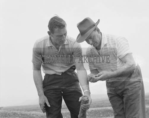 27th May 1964; The transatlantic cables being dug up on the island of Valentia. Photographed on the left is Joe Keating with an unknown man.