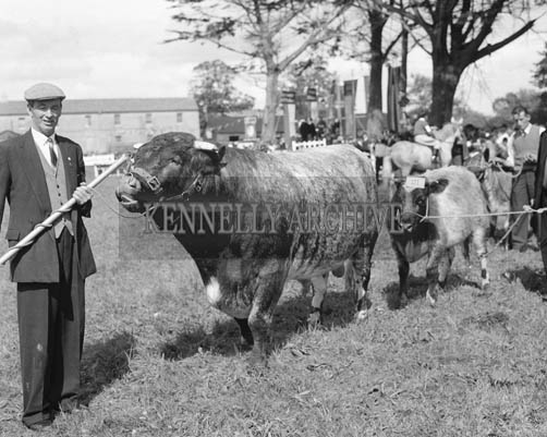 26th/28th May 1964; A photo taken at the Cattle Section at the Kingdom County Fair in Tralee.