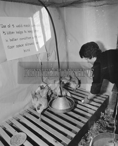 26th May/28th 1964; A photo taken at the Horticultural Show at the Kingdom County Fair in Tralee.