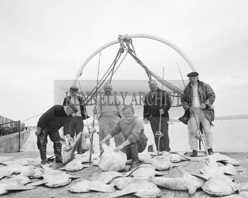 3rd June 1964; A photo of a record catch of monkfish on Fenit Pier. The catch included 37 monkfish and 2 tope and was landed less than a mile off Fenit Pier in under 3 hours. The catch had a total weight of 1,356 lbs. and contained 8 specimen of fish. In pucture (from left): Mike Moriarty, S. Warren, F. Robins, Micheal Moriarty, George Warren and Bill Warren.