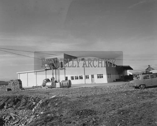 July 1964; Frozen Salmon at Renard Fish storing plant in Caherciveen.