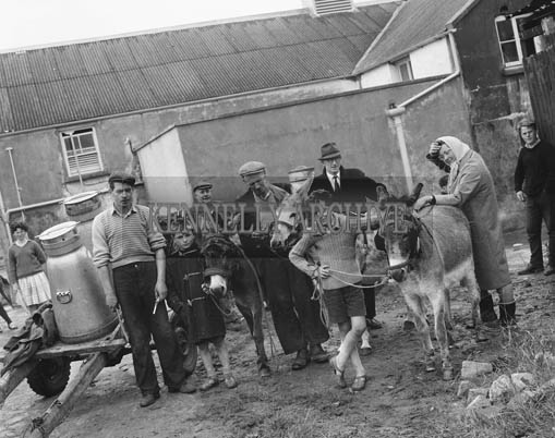 11th July 1964; A free chiropody service for donkeys was set up by the KSPCA. A blacksmith employed by the Society attended at Rattoo Creamery on Saturday, 11th July and pared the hooves of 25 donkeys.