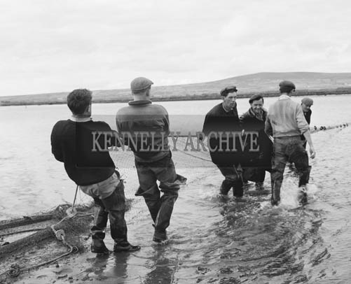 July 1964; A photo of fishermen netting Salmon in the Cashen.