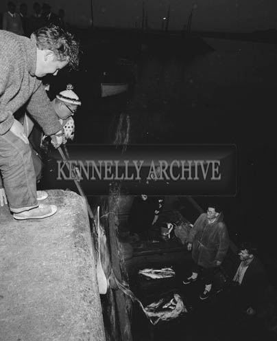 2nd August 1964; A photo of the weigh-in at a spearfishing competition in Valentia.