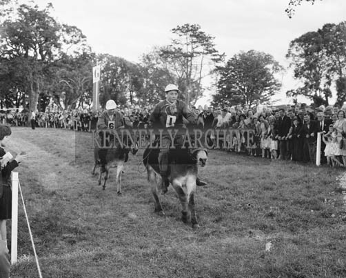 29th August-3rd September 1964; The Donkey Derby in Tralee Town Park at the Festival of Kerry.