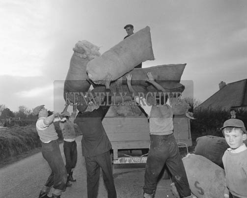 27th October 1964; Farmers packing wool for export in Annascaul and Camp.