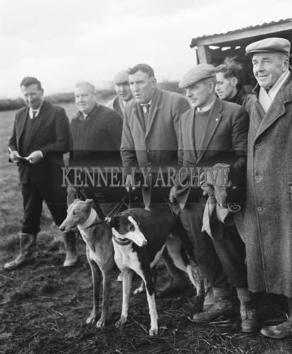 18th November 1964; Mick Murphy (centre), one of the most experienced slippers in Ireland, holding two greyhounds at the North Kerry coursing meeting in Ballyduff.