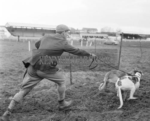 1st December 1964; A photo of a coursing meet in Listowel.