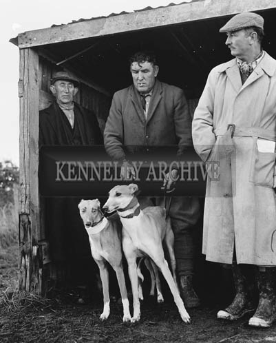 Tuesday 15th December 1964; A photo taken at a coursing meet in Lixnaw.