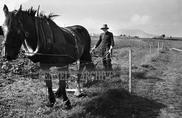 1953; A Farmer Working With His Horse And Plough On Valentia Island.