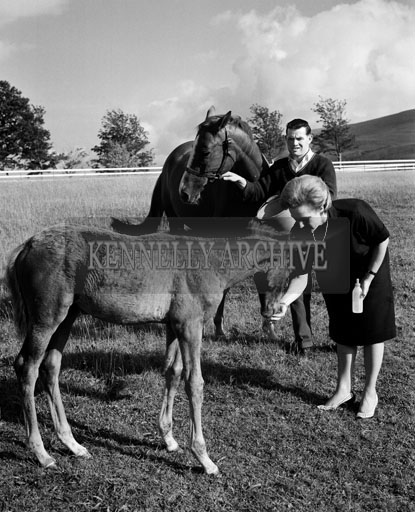 August 1964; A photo of Hotel Europe Manageress Olga Mieir feeding horses in Killarney.
