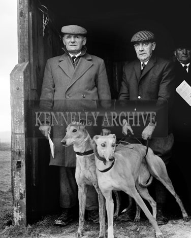 29th December 1964; Two men with their greyhounds at the Kingdom Cup coursing meeting in Ballybeggan Park, Tralee.