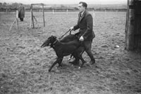 26th-28th December 1953; The slipper at Ballybeggan Park for the Kingdom Cup coursing meeting.