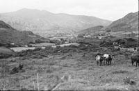 Scenic Kerry
