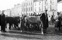 Castleisland Horse And Cattle Fair