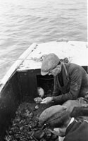 Oyster Dredging In Fenit