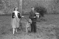 Winning Greyhound