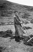 10th August 1956; A photo taken of a man working the land near Dingle.