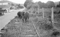 10th August 1956; A photo taken on the site that was once the Dingle Railway Line.