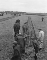 Abbeydorney Ploughing Match
