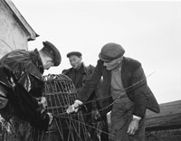 Fishermen With Oyster Cages