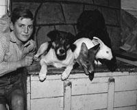 A Boy With Animals