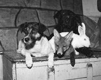 Animals from St Joseph's