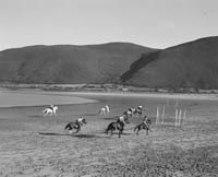 Galloping Horses on Rossbeigh Beach
