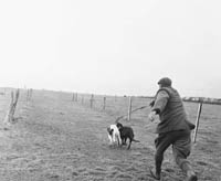 Coursing in Ballyduff
